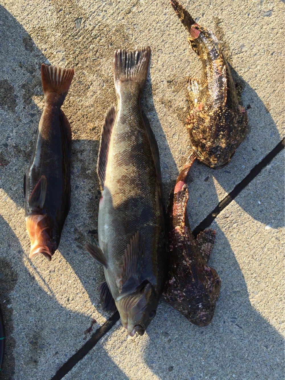 アングラー儀洋さんの投稿画像,写っている魚はアイカジカ