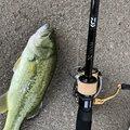 ゆめさんの高知県土佐市での釣果写真