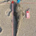 とも0402さんの宮城県名取市でのコチの釣果写真