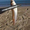 フーさんさんの新潟県でのシロギスの釣果写真