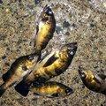 ジーン さんの千葉県富津市での釣果写真