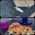 しなもん えいちゃんさんの福岡県でのアジの釣果写真