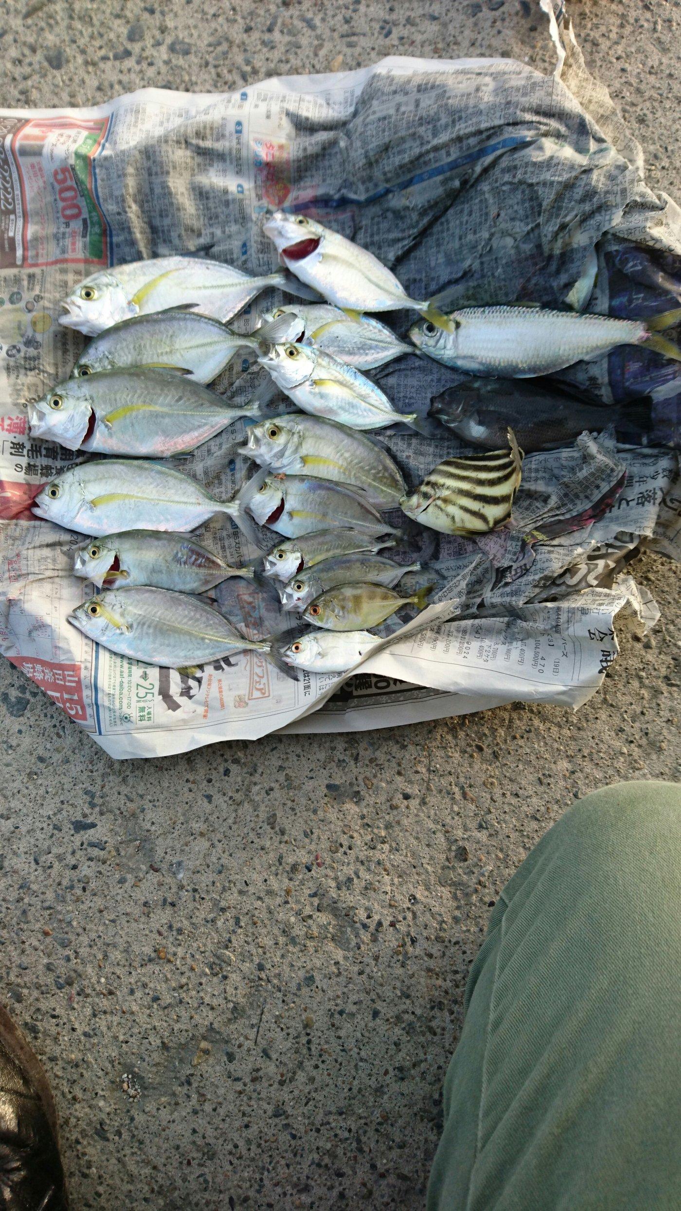 nose136さんの投稿画像,写っている魚はアジ