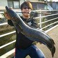 Hirotoさんの鳥取県鳥取市での釣果写真