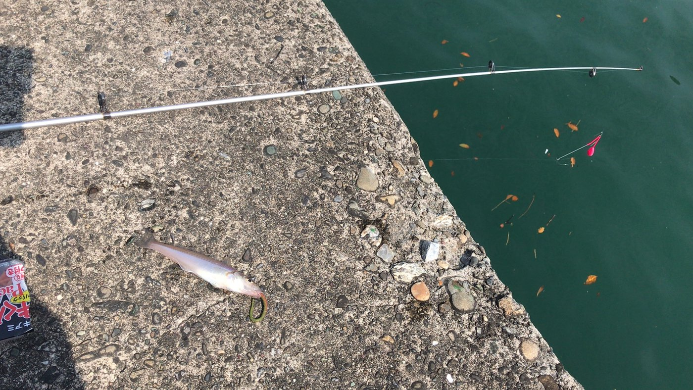 モバイル釣り師さんの投稿画像,写っている魚はシロギス,カサゴ
