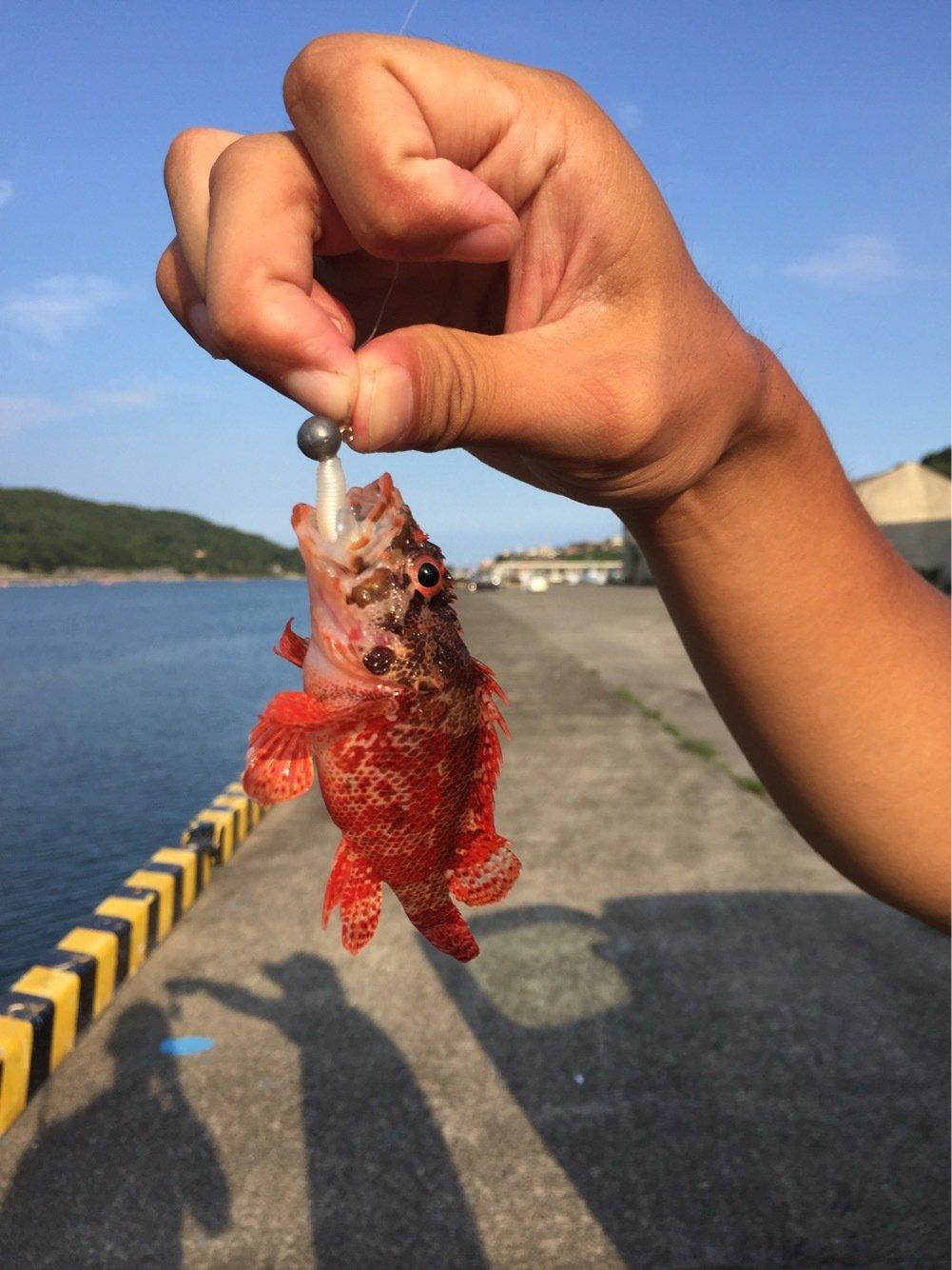 エソさんの投稿画像,写っている魚はカサゴ