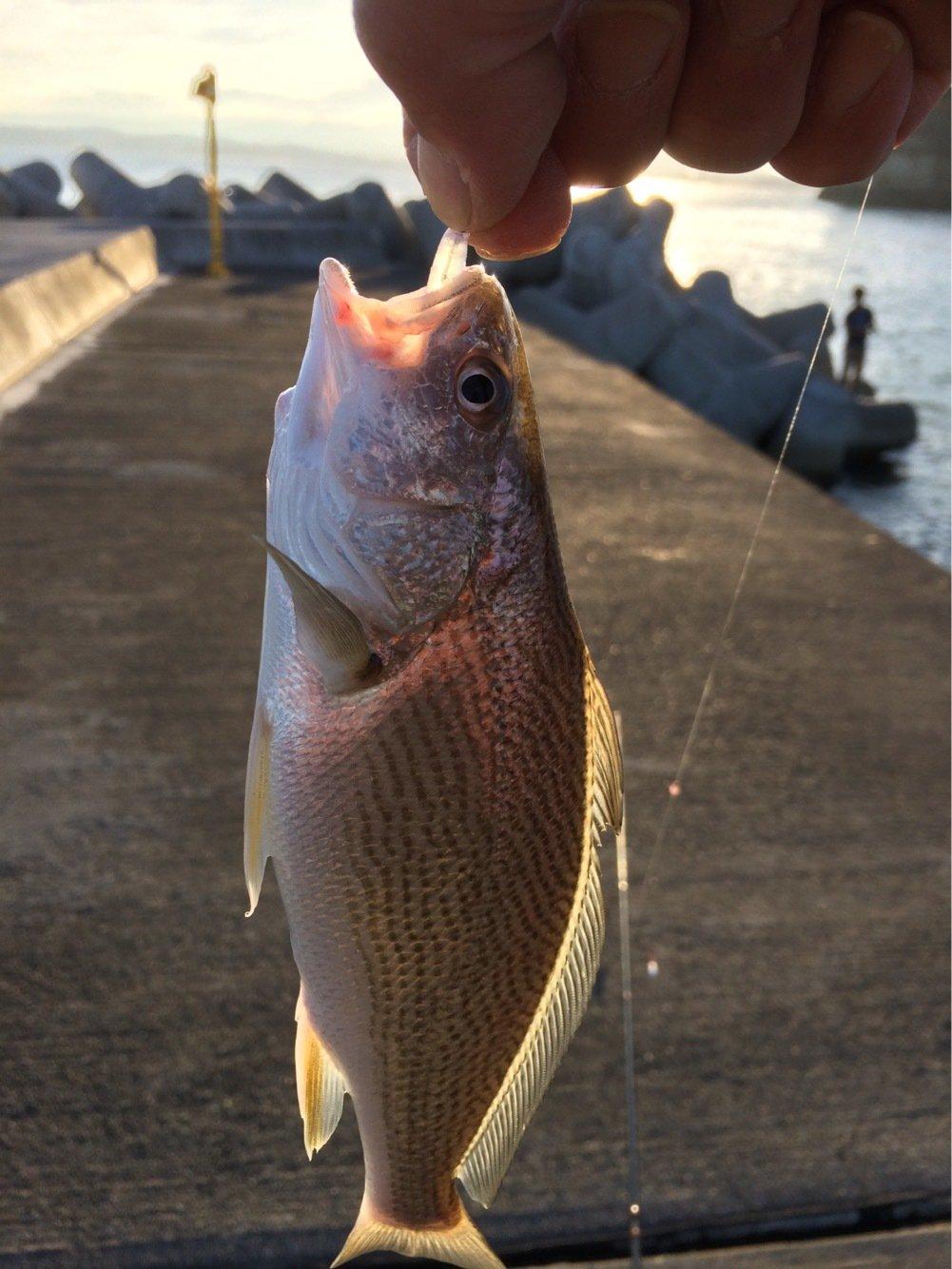 釣坊主さんの投稿画像,写っている魚はイシモチ