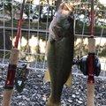 としまろさんの岐阜県養老郡での釣果写真