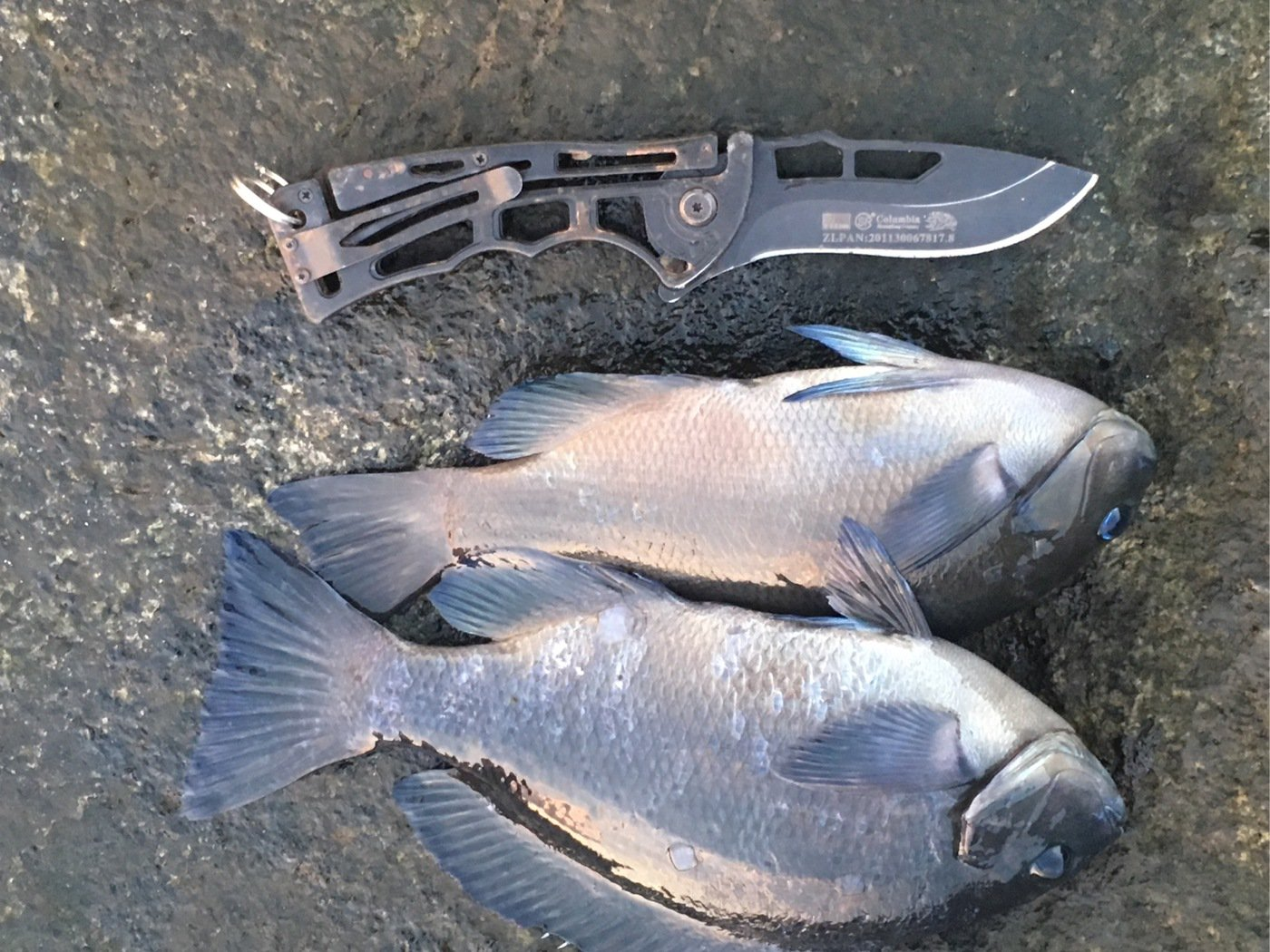 gure8さんの投稿画像,写っている魚は