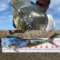 け〜たゴリラさんの鹿児島県でのシイラの釣果写真
