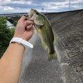釣りキチさんの高知県高知市での釣果写真
