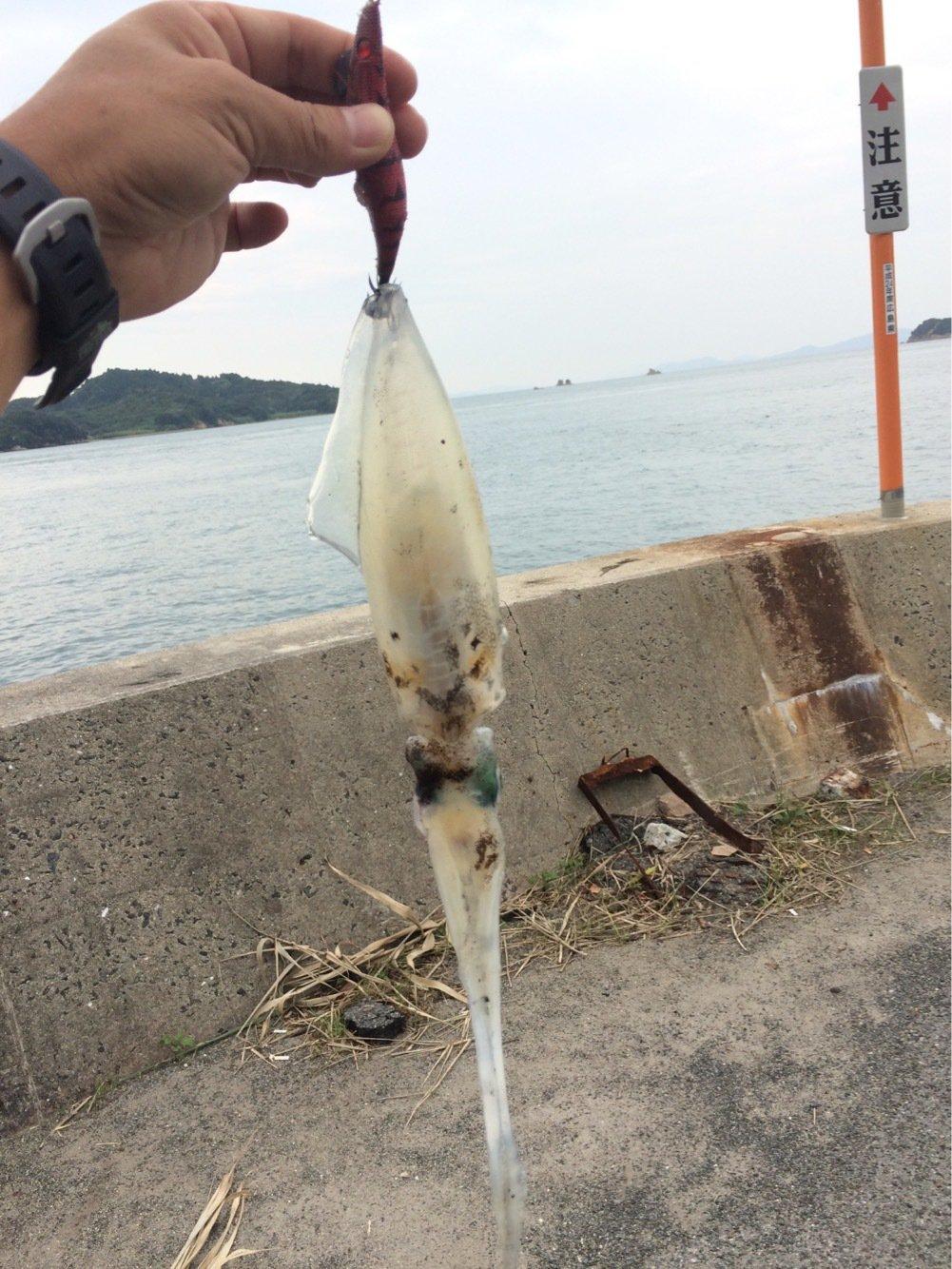 プロペラ機さんの投稿画像,写っている魚はアオリイカ