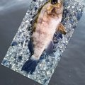 snufkin49さんの兵庫県神戸市でのメバルの釣果写真