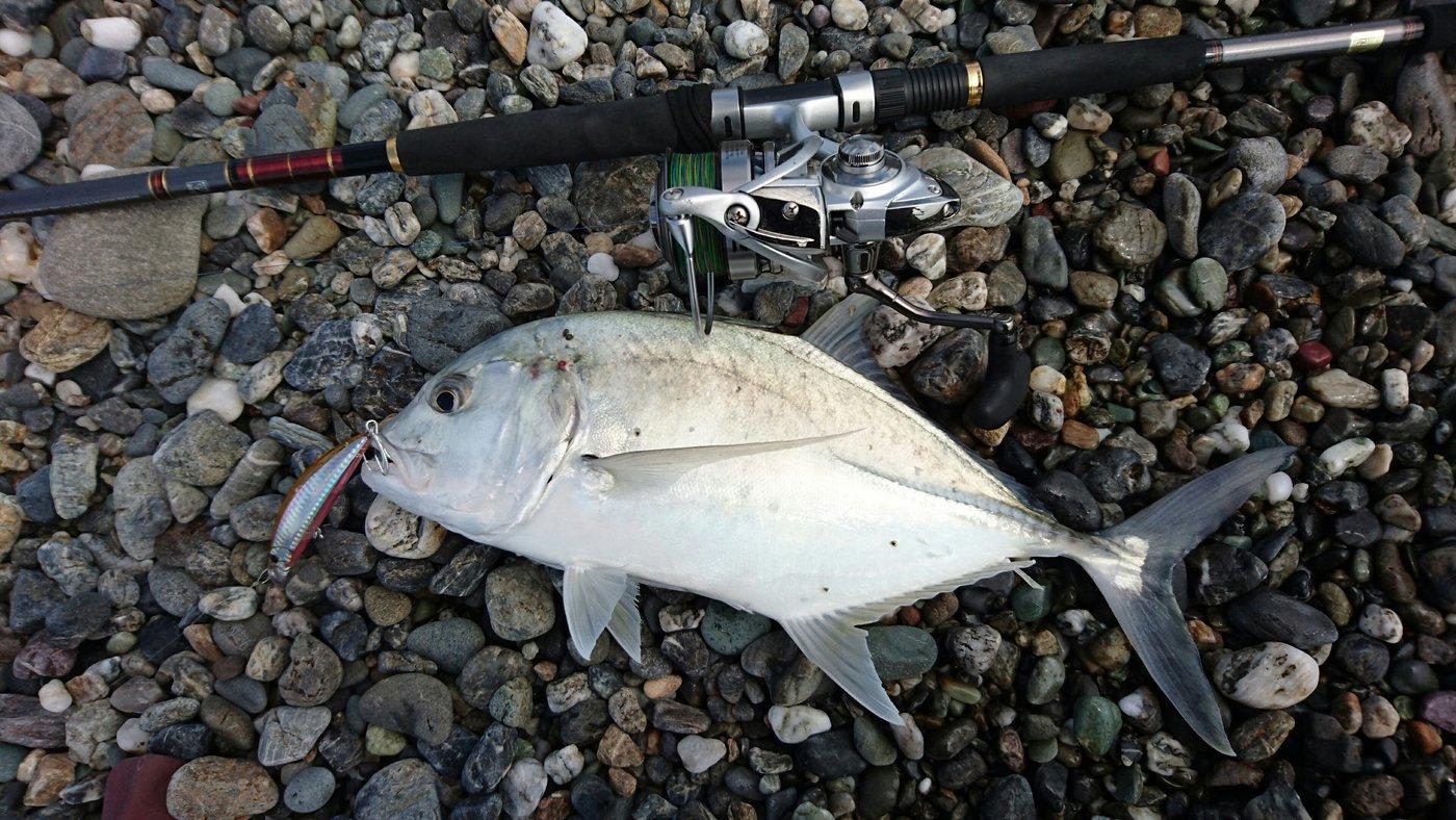 ぶっちゃんさんの投稿画像,写っている魚はギンガメアジ