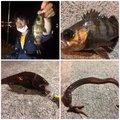 FREESTYLE(おーみ)さんの宮城県でのアナゴの釣果写真