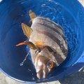 sayachel🐡さんの千葉県鴨川市での釣果写真