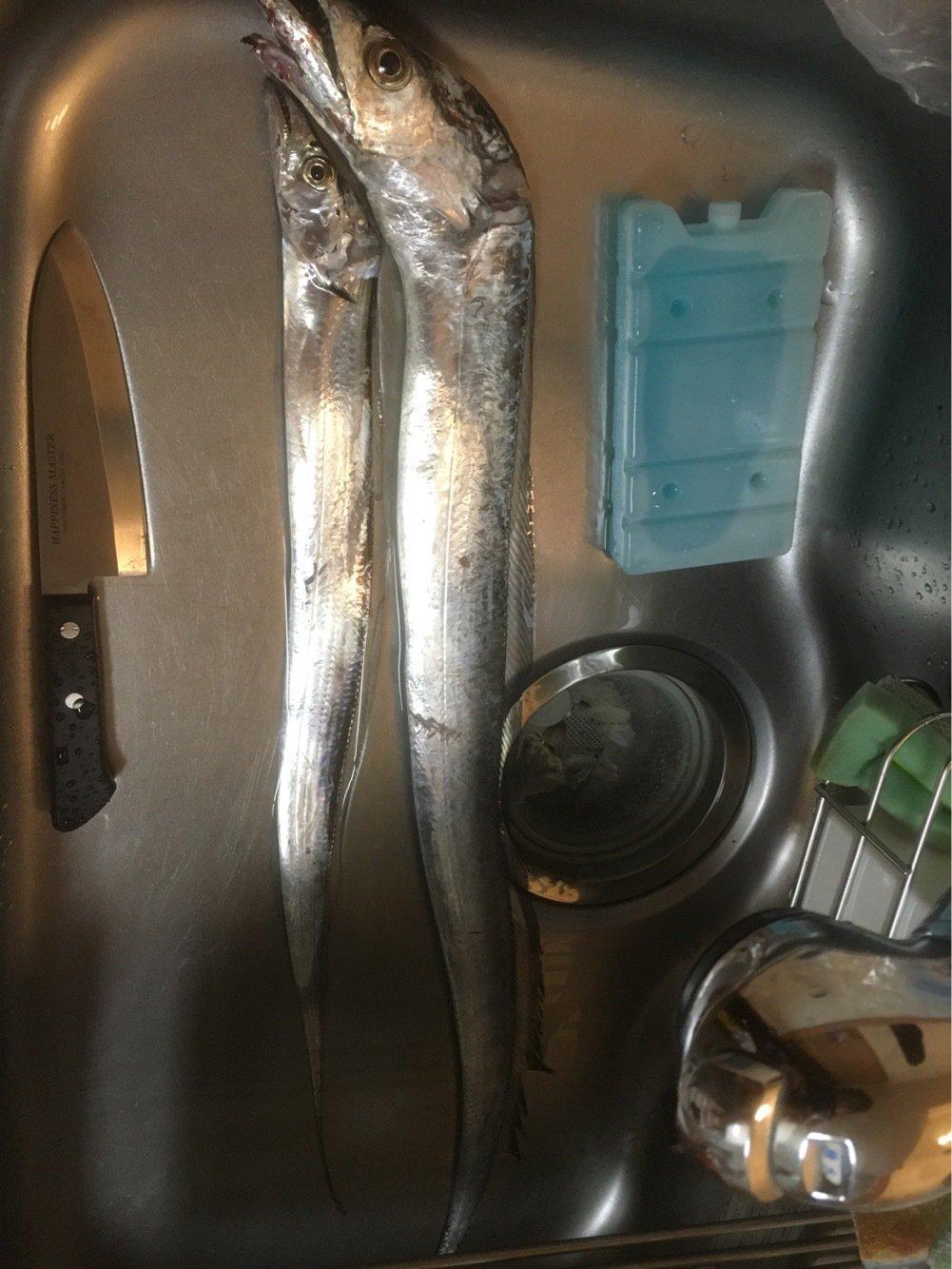しょうさんの投稿画像,写っている魚はタチウオ