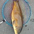 カイリさんの静岡県富士市での釣果写真