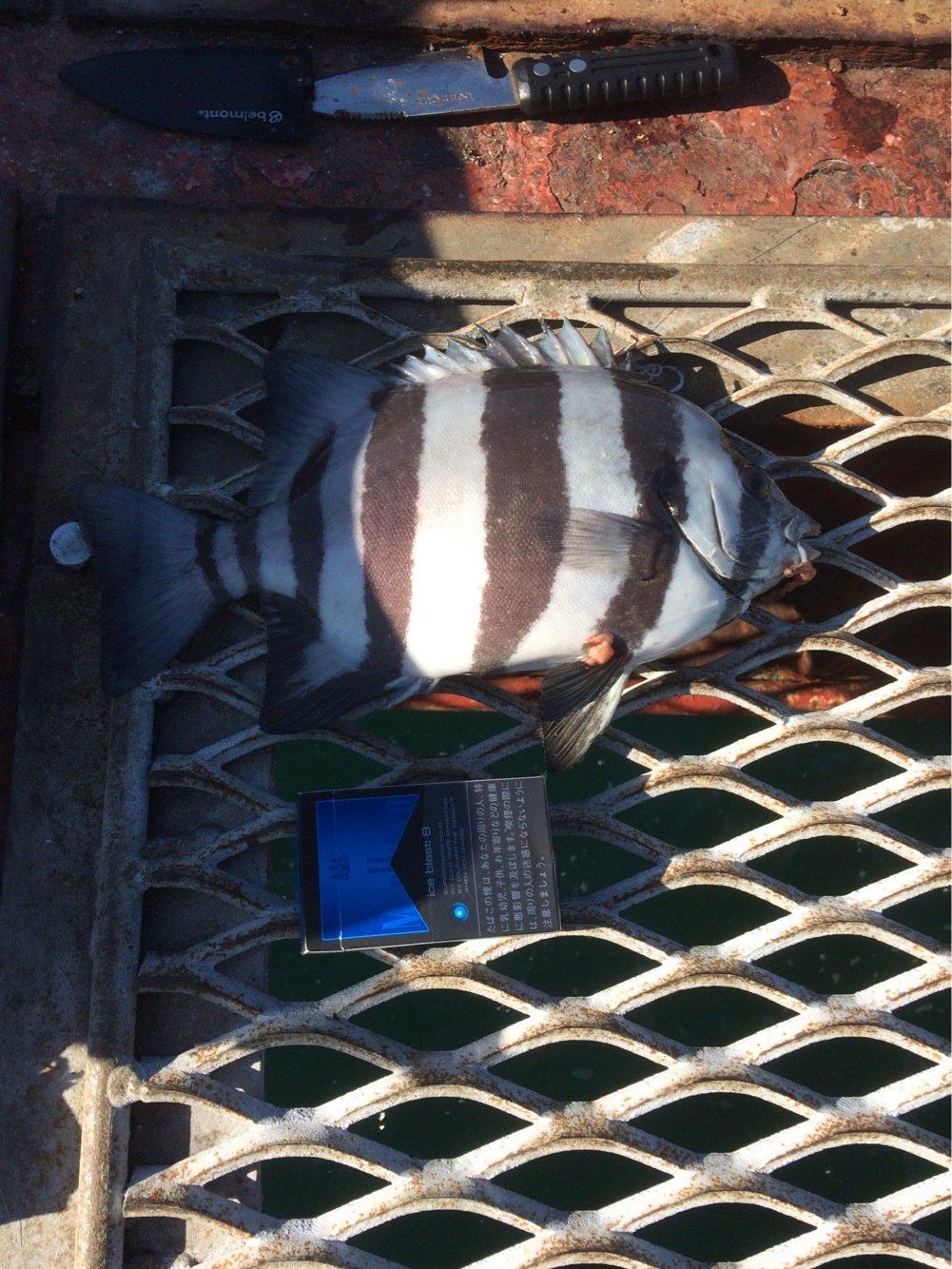 井上高幸さんの投稿画像,写っている魚は