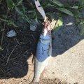 ムラテツさんの熊本県熊本市での釣果写真