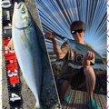 ポニーさんの千葉県鴨川市での釣果写真
