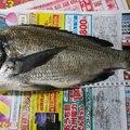 福助さんの長崎県南島原市での釣果写真