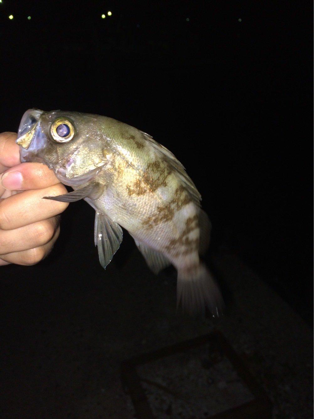 buryunntoさんの投稿画像,写っている魚はメバル