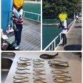 Yoshitaka Itohさんのメジナの釣果写真