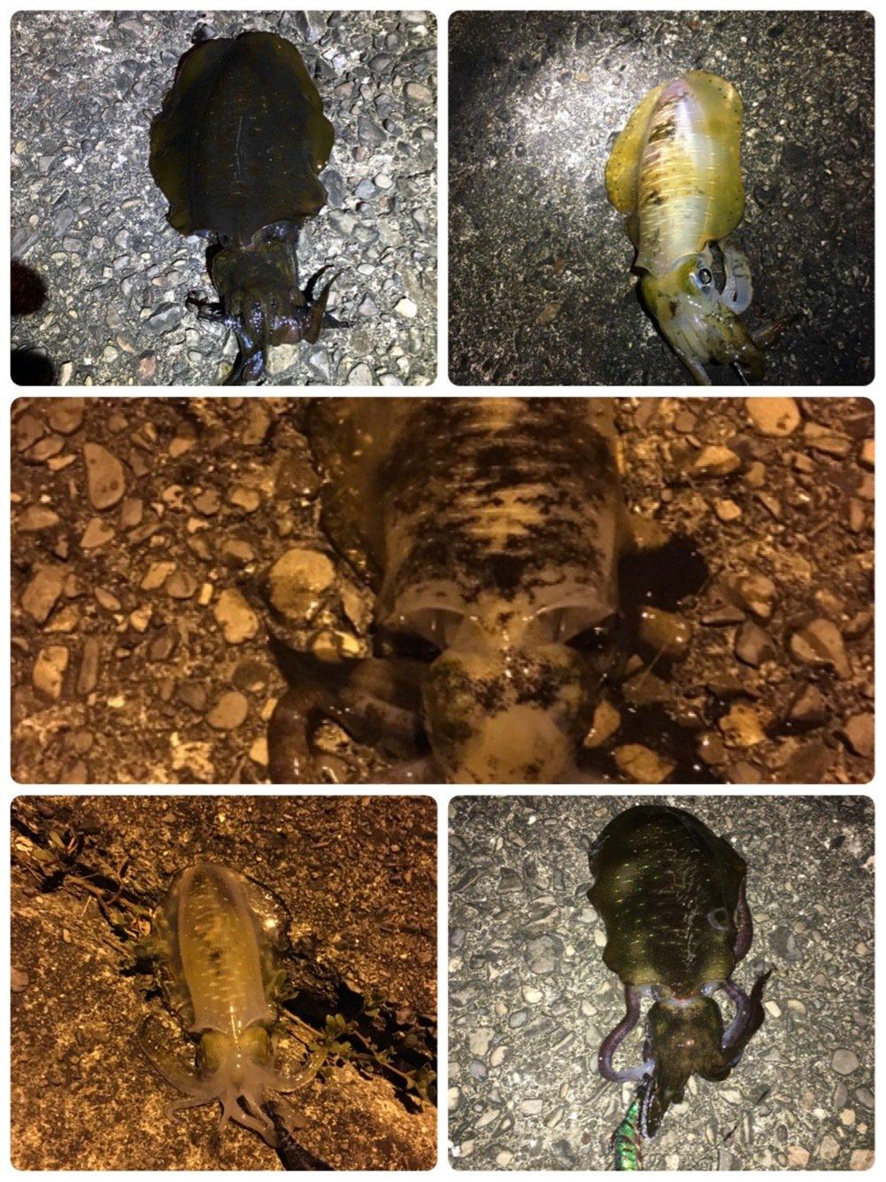 朋希さんの投稿画像,写っている魚はアオリイカ