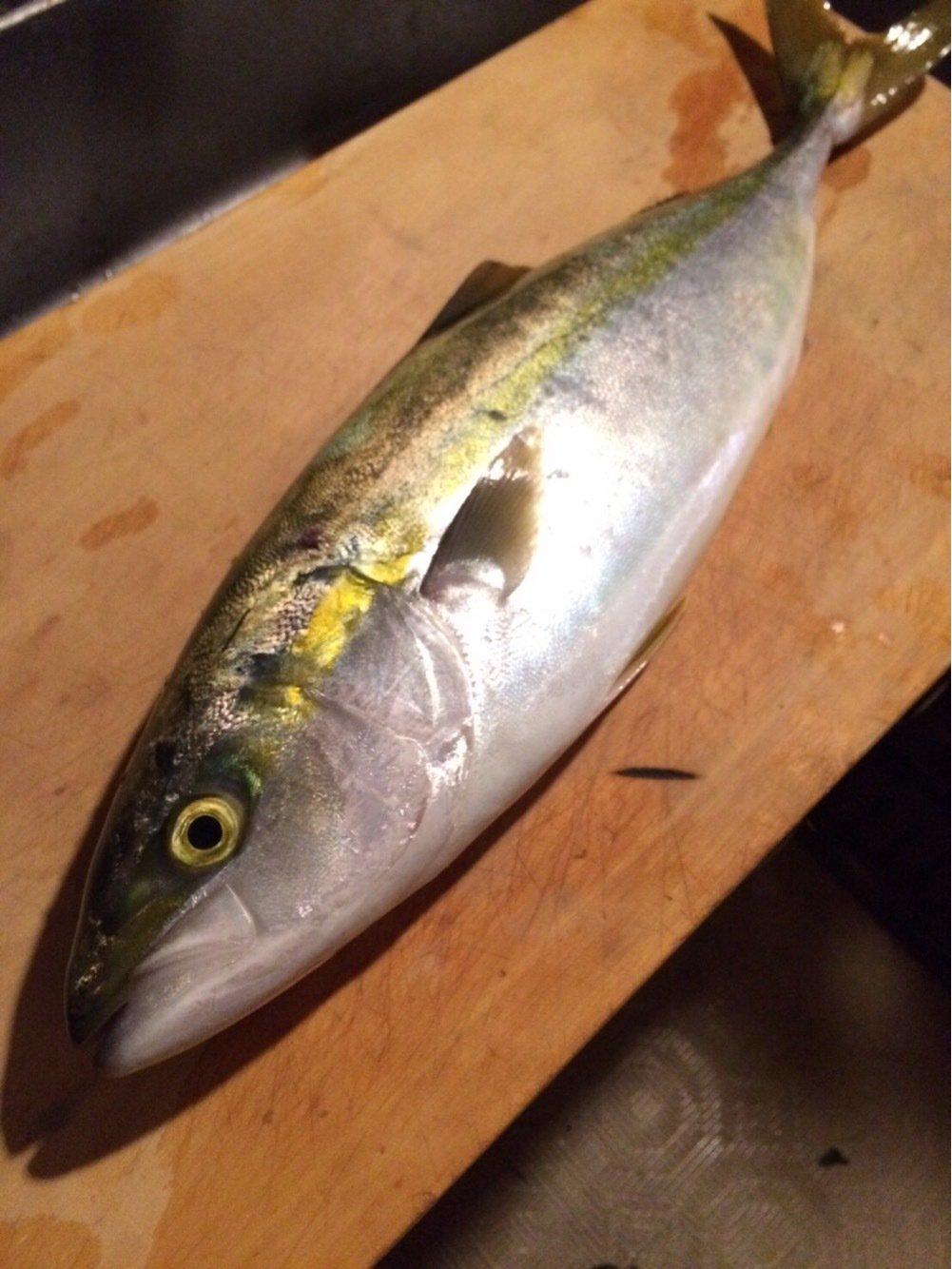 其処乃所 宜君さんの投稿画像,写っている魚はブリ