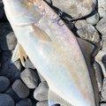 roppyさんの静岡県焼津市での釣果写真