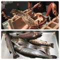 Mochoncelliさんの山梨県での釣果写真