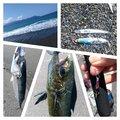 Y·D·Kさんの静岡県沼津市でのマサバの釣果写真
