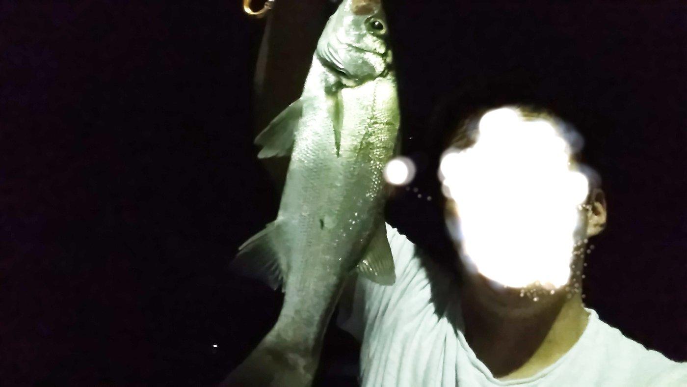 たーまさんの投稿画像,写っている魚はスズキ