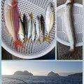 ✿美海✿さんのイトヨリダイの釣果写真