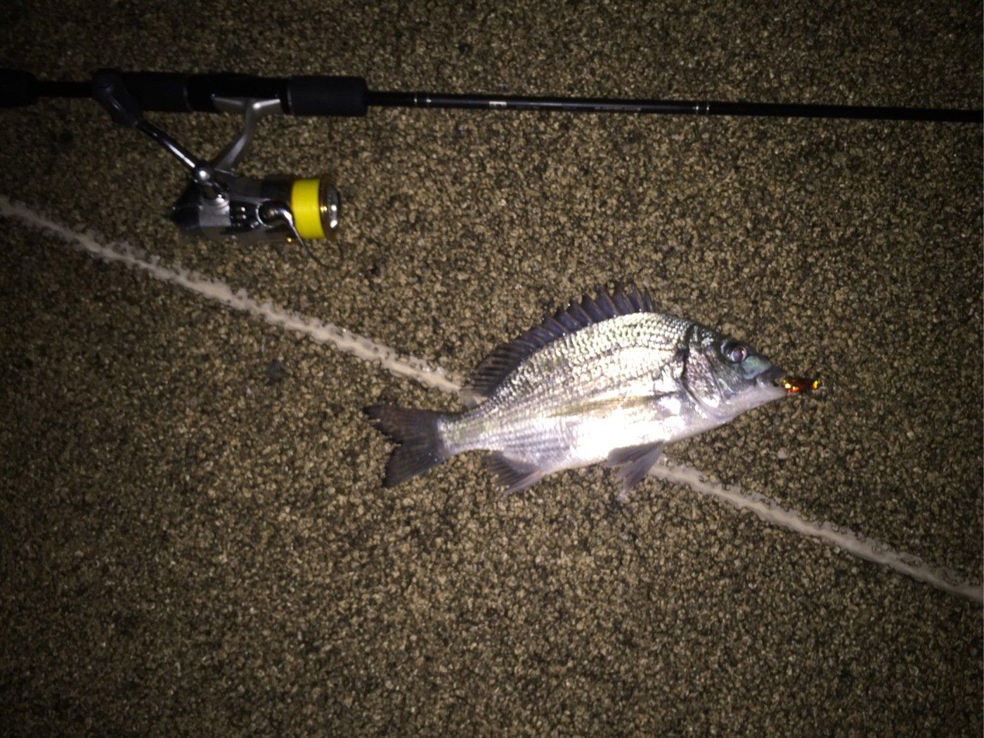 ルアー男さんの投稿画像,写っている魚はクロダイ