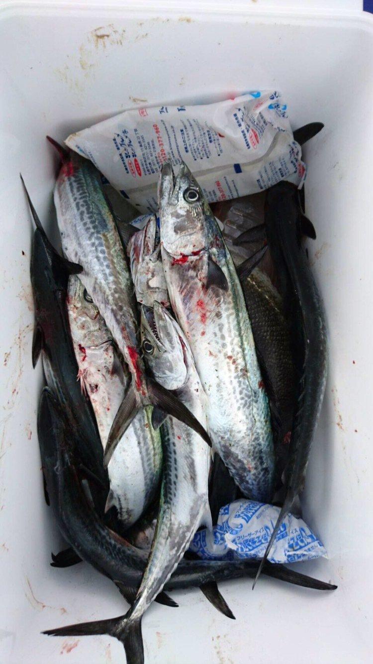 俺参上さんの投稿画像,写っている魚はサワラ