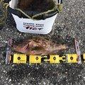 キジトラさんの山形県での釣果写真