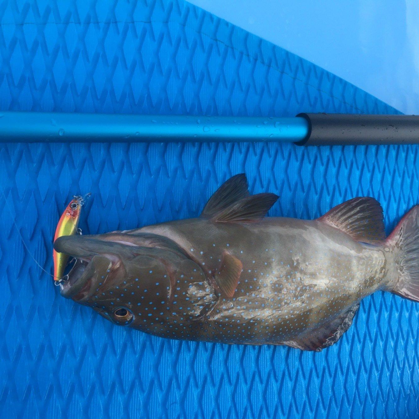 ノリだーさんの投稿画像,写っている魚は