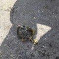 skyさんの兵庫県明石市でのカワハギの釣果写真