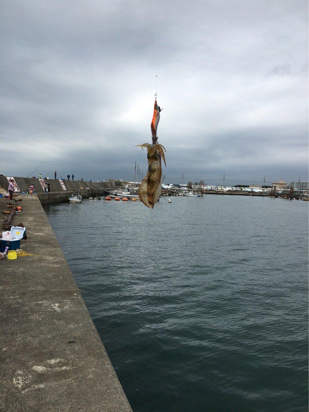 skyさんの投稿画像,写っている魚はアオリイカ