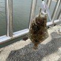 もっき@ゆるふわ子育てブロガーさんの三重県鈴鹿市での釣果写真