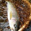 しょうさんの山形県での釣果写真