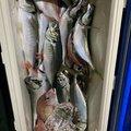 すーさんさんのサワラの釣果写真