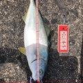 ひろみさんの岩手県久慈市での釣果写真