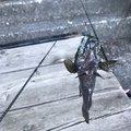 Goさんの山梨県での釣果写真