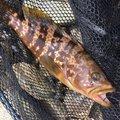 17才さんの宮崎県での釣果写真