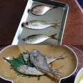 Phokaraさんの静岡県焼津市での釣果写真