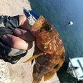 fishing life  🎣さんの岡山県での釣果写真