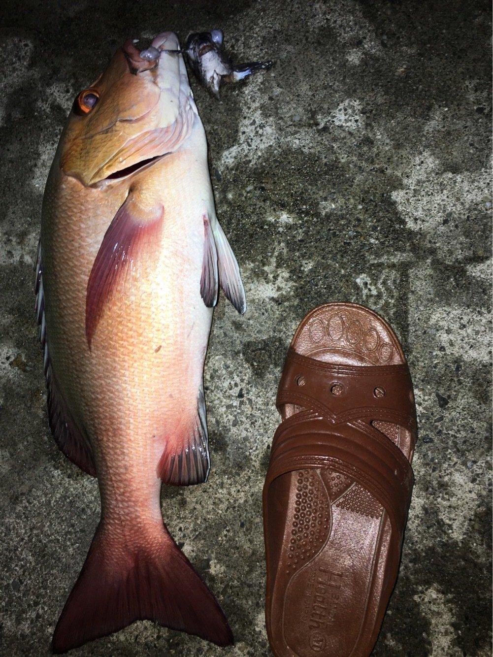 ゆうちゃんさんの投稿画像,写っている魚は
